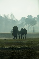 Knuffelen. (limburgs_heksje) Tags: nederland niederlande netherlands noord brabant beekse bergen safaripark dierenpark