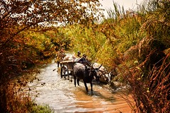 Creek Road, Madagascar (Rod Waddington) Tags: road water cane creek sugar ox roadside cart oxen madagascar zebu malagasy