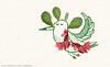 tumblr_n8eufnfJGT1rqcmjzo6_540 (ranflygenring1) Tags: illustration iceland drawing illustrations nordic scandinavia reykjavík ran rán flygenring ránflygenring ranflygenring icelandicillustrator flygering icelandicillustrators nordicillustrators