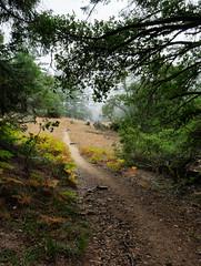 Mountain Trail (B. Gohacki) Tags: california mountain nature beauty fog landscape pentax path marin trail ricoh mounttamalpais k3 smcpentaxda14mmf28