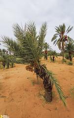 dsert (med hachimi) Tags: desert morocco dsert tinejdad errachidia  chikh  nkhla  khtart