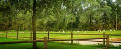 IMG_5828 HFF with the storks (pinktigger) Tags: trees italy bird nature fence italia meadow stork cegonha cigea friuli storch ooievaar hff fagagna cicogne gtreen cicogna oasideiquadris feagne