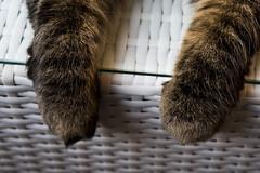 Pause / Paws (PG63) Tags: cat norwegian vilar norsk tassar vildabror
