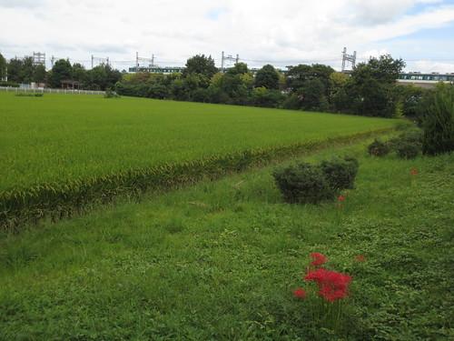 広がる田園