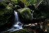 MUSCHI (Lace1952) Tags: foglie autunno muschi torrente sigma1020mm vestito cascatella nikond7100
