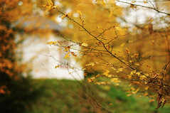 HBW!! (Frau Koriander) Tags: wood autumn tree fall colors leaves forest germany landscape deutschland 50mm leaf woods colours dof hessen bokeh outdoor branches herbst blatt wald bltter treebranches baum darmstadt zweige arheilgen herbstfarben gest hbw buntebltter bokehporn happybokehwednesday nikond300s dianaburg darmstadtarheilgen