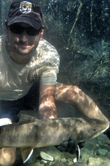 Getting into his work (USFWS Mountain Prairie) Tags: fish montana trout usfws usfishandwildlifeservice bulltrout montanafishandwildlifeconservationoffice