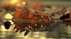 imperfection (joy.jordan) Tags: autumn light reflection sunrise hearts puddle leaf bokeh ontheground