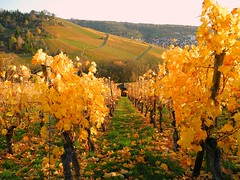 Rotenberg (almresi1) Tags: autumn germany stuttgart herbst gelb vineyards abendsonne rotenberg badenwrttemberg weinberge