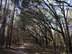 Miccosukee Canopy Road Greenway, Tallahassee, FL (vacationer1901) Tags: mushroom florida snail autumnleaves tallahassee treecanopy missosukeecanopyroadgreenway