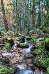 Entre arboles (Perurena) Tags: trees naturaleza nature water rio forest river agua arboles bosque pontevedra vegetación moaña efectoseda riodafragas