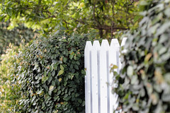 White Fence (Yann Cerri) Tags: door white plant tree green grass fence gate whitefence