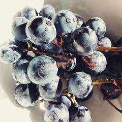 perfect grapes. (sonjavonfaltin) Tags: grapes weintrauben