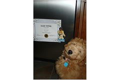 george-and-his-diploma--he-was-the-valedictorian--hes-one-of-morgan-and-chewys-puppies-_2330425957_o