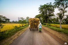 At the end of the day (Satyajeet Sahu) Tags: farmers fields paddyfields village chhattisgarh india rural evening crops bullockcart wideangle canon 600d nature colors green paddy