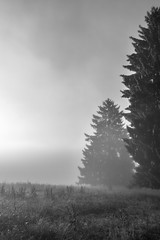 Emergence (MrMyz) Tags: bw france franchecomt infinitexposure nb arbre beautifullight bellelumire blackwhite blackandwhite brouillard calm calme canon doubs eos eos5d exterieur fog forest foret hautdoubs heuredore landscape leverdesoleil light lumire lumirematinale matin mist monochrome morning morninglight morteau mrmyz nature noirblanc noiretblanc outdoor paysage region sauvage solitude solo sunrise tree valdemorteau zen