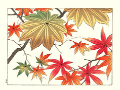 Painted maple and Japanese maple (Japanese Flower and Bird Art) Tags: flower painted maple acer mono aceraceae palmatum hoitsu sakai kiitsu suzuki kimei nakano nihonga woodblock picture book japan japanese art readercollection
