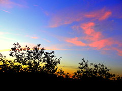 New York Sunset (dimaruss34) Tags: newyork brooklyn dmitriyfomenko image sky clouds trees tree autumn fall foliage