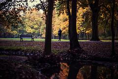 mojo (ewitsoe) Tags: magic sunset warm glow yello leaves fall atumn lady woman park autumn trees foliage ewitsoe nikond80 35mm poland poznan reflection polska goldenfall