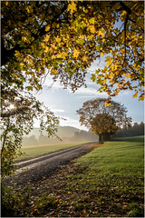 Autumn  & Light (:: Blende 22 ::) Tags: backlight gegenlicht lowpov deutschland thuringia thüringen eichsfeld eic landkreis landscape landschaft herbst autumn light lightshadow rays sun sunnyday morning earlymorning fog foggy person walk walking dog spaziergang morgens neblig nebel morgennebel sonnenstrahlen wald forest beams laub leaves color colorful farben farbig herbstfarben weg path ef2470f28liiusm canoneos5dmarkiv wolken bewölkt clouds cloudy bluesky sky blauerhimmel himmel blau lumen lux luz luce licht свет lumière φωσ