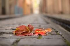 Colores de otoo - Autumn colors (Nathalie Le Bris) Tags: otoo fall tardor automne leaf feuille hoja vigne parra dof bokeh street rue ground sol