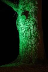 Die Eiche bei Nacht (Klaus R. aus O.) Tags: eiche baum park schlosspark nacht laubbaum bunt licht ast berg laub herbst serie