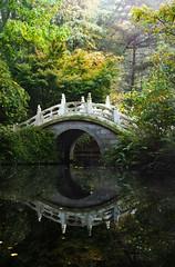 Chinese Garden (Christoph Kampf) Tags: chinese garden chinesegarden bamboo bambus bridge brcke nebel sunlight green nature statue nikon d700 80200 nikond700
