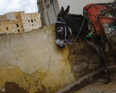 Local transportation (cekuphoto) Tags: 2010 d70 fez morocco november