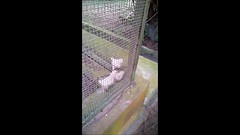 The poor lil' thing (nk43pozertaq) Tags: animals zoo chick food owl