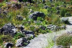 Альпийская горка (tatianatorgonskaya) Tags: мюнстер германия европа флора растение ботаническийсад ботаническийсадгермания ботаническийсадмюнстер чтопосмотретьвгермании достопримечательностигермании интересноевгермании europe germany german deutschland münster attraction plant