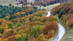 strade a colori (Luigi Alesi) Tags: 201610ottobre canfaito italia italy marche macerata san severino matelica riserva naturale del monte vicino e paesaggio landscape scenery natura nature colori colors autunno fall autumn strada road way nikon d7100 raw 50mm