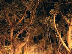 1 Dark and Banyan Trees (Mertonian) Tags: banyantree paradise maui2016 awe wonder darkness light creepy night maui hawaii mertonian robertcowlishaw canonpowershotg7xmarkii canon powershot g7x mark ii 1 depth ineffable deep