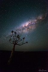 Namibian Sky II (Maico Presente) Tags: namibia milkyway night sky tree travel africa fishrivercanyon light pollution