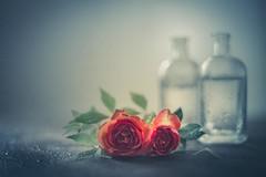 Two roses (RoCafe) Tags: pentacon50mmf18 stilllife flowers roses orange bottles vintage retro vintagelens nikond600 soft textured