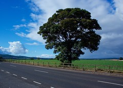 Scotland (Bob Bain1) Tags: douglastown scotland scenry forfar angus tayside canoneos sky clouds blue landscape green