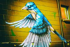 Tweeting in Oakland (Thomas Hawk) Tags: america california eastbay oakland usa unitedstates unitedstatesofamerica bird graffiti streetart fav10