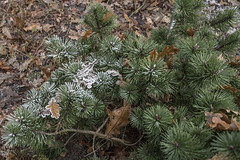 Erster Frost - 0002_Web (berni.radke) Tags: ersterfrost frost raureif wassertropfen rime eisblumen eiskristalle iceflowers icecrystals escarcha