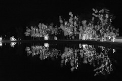 Christmas Reflections (SopheNic (DavidSenaPhoto)) Tags: fujinon35mmf14 xe1 multipleexposure edavillerailroad fuji reflection christmaslights blackandwhite monochrome christmas carver massachusetts unitedstates us