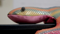 Staring Contest (Coyoty) Tags: office toy lizard monitor monitorlizard colors macro bokeh macromondays mydailyroutine dust staring staringcontest rainbow yellow green pink shiny texture polkadot dot close closeup black orange stripes fabric curve edge whimsical fun dustty pattern
