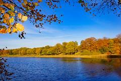 Edgbaston pool (stevehimages) Tags: colours steve steveh stevehimages wowzers warden west midlands 2016 winterbourne house gardens edgbaston pool