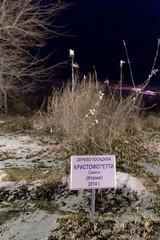 Samantha Cristoforetti (Granmuc) Tags: baikonur cosmonaut alley trees