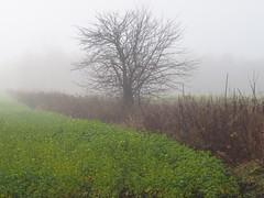 Solitude (Lise1011) Tags: brume olympus olympusomd ngc landscape nature smog brouillard tree arbre