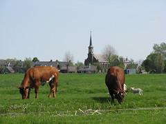 IMG_7005 (Momo1435) Tags: nederland groene hart alphen meije aarlanderveen ter aar