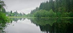 Green & grey (Loch Ard, Scotland) (armxesde) Tags: pentax ricoh k3 grosbritannien uk schottland scotland lochard loch see water wasser reflection spiegelung tree baum