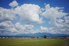 Furano Field (Gai) Tags:    nakafurano hokkaido japan   summer      blue sky  cloud  plant  mountain  green  field  country  sunny