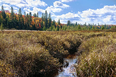 Vibrant Tree Line (Knarr Gallery) Tags: autumn wetland stream river reeds bullrushes nikon beaverpond muskoka huntsville rosseau fallcolors fall creek nikon18200mmvriiafs clouds sky water knarrgallery
