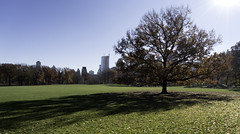 Sheep Meadow in December (Joe Josephs: 2,861,655 views - thank you) Tags: centralpark joejosephs nyc newyorkcity copyrightjoejosephs landscapephotography outdoorphotography ny usa