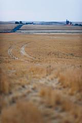 Harvest Winds (Cody Schroeder) Tags: morning summer field rural canon washington spokane bokeh path farm wheat sony harvest a7 135mm palouse alpha7 f2l