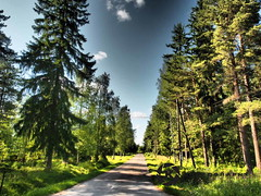 Finland (jan-krux photography - thx for 1.5 Mio+ views) Tags: travel trees sky lake clouds suomi see reisen europa europe finnland colours himmel olympus scandinavia landschaft forests baeume farben em1 waelder lndscape skandinavie helmsjoen terjaerf hemsjoen terjaev
