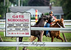 Trainin' (EASY GOER) Tags: summer horses horse ny newyork sports beauty race canon athletics track saratoga competition upstate running racing course event 5d ponies athletes tradition races sporting spa thoroughbred equine exciting thoroughbreds markiii
